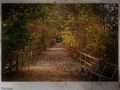 L'autunno e i suoi colori