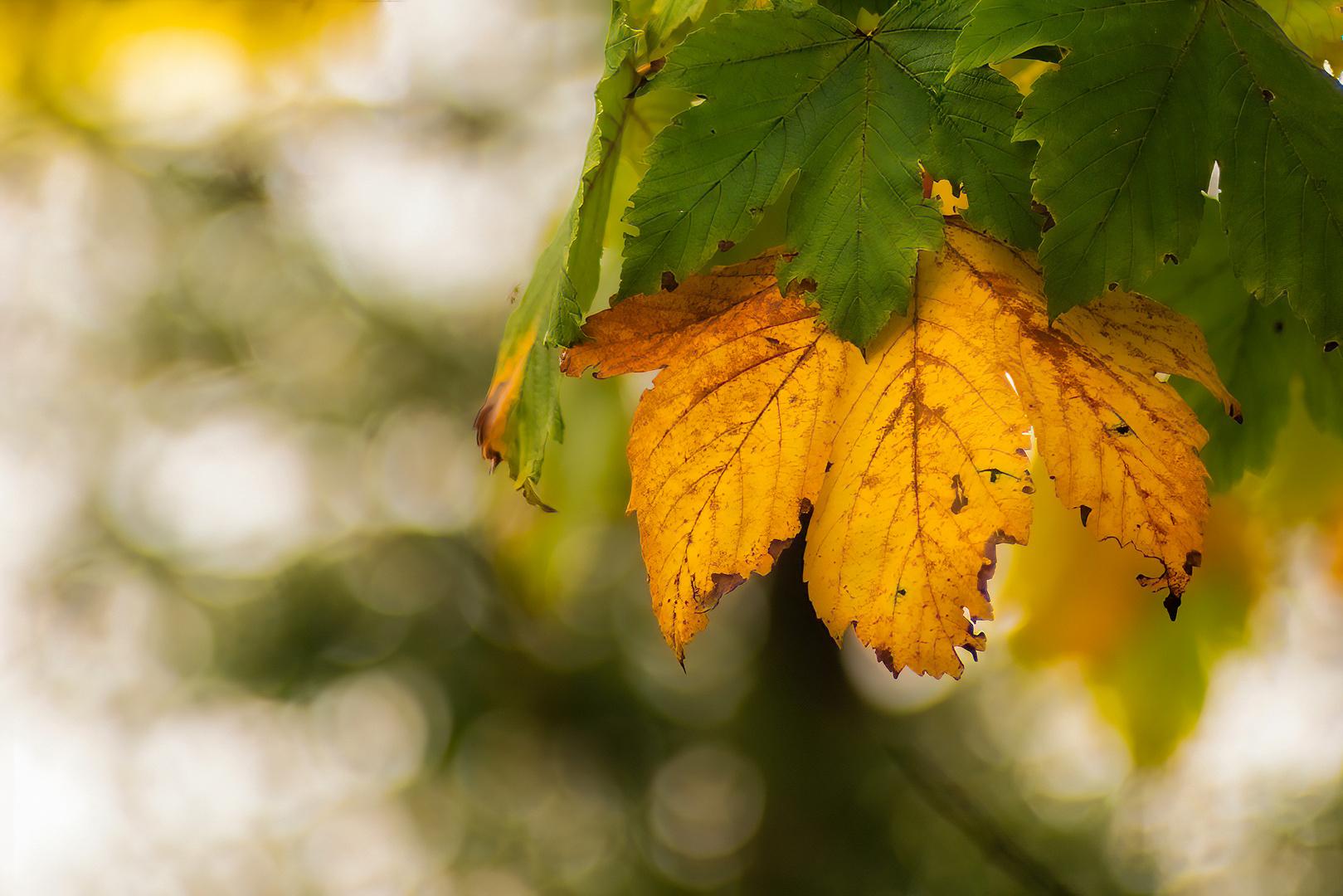 L'autunno, la stagione piu' bella dell'anno