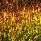 L'autunno nel canneto