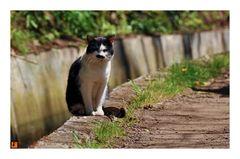 Lavada-Katze