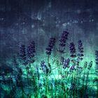 Lavendel * 808