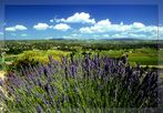 """Lavendel"""