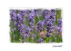 Lavendel.....