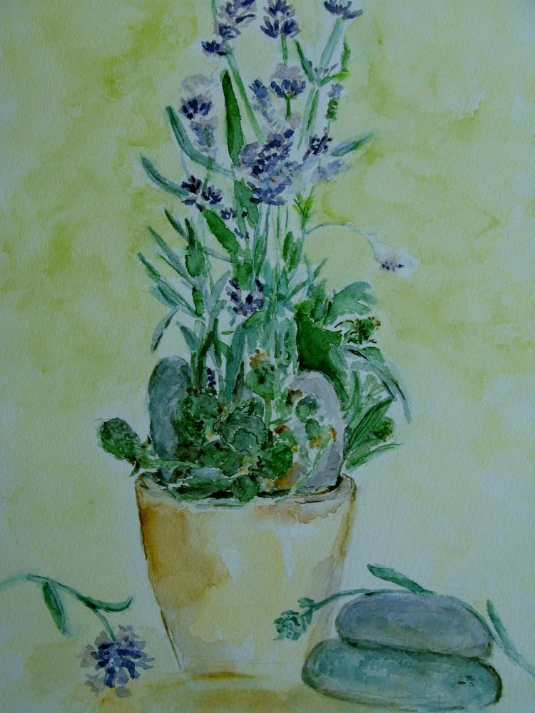 Lavendel im Topf