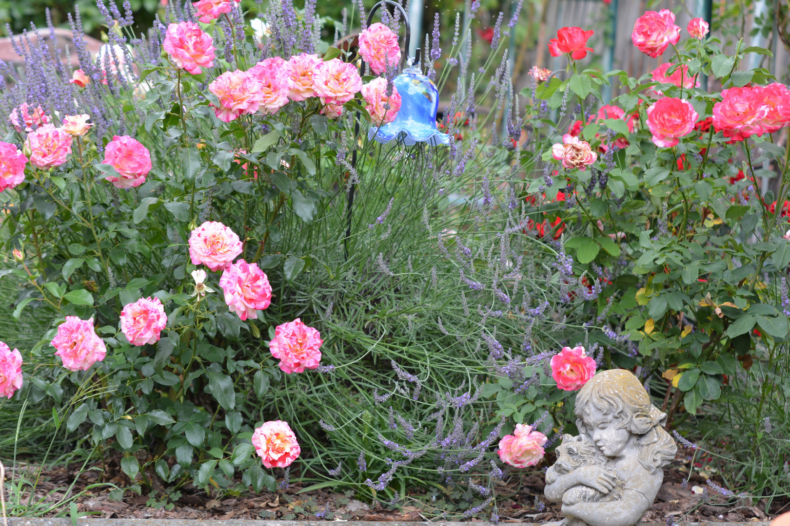 Beliebt Bevorzugt Lavendel in den Rosen Foto & Bild | pflanzen, pilze & flechten &RA_05