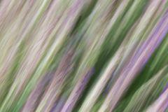 Lavendel (scharf)