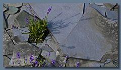 Lavendel spielt Schattentheater