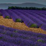 Lavendel xx