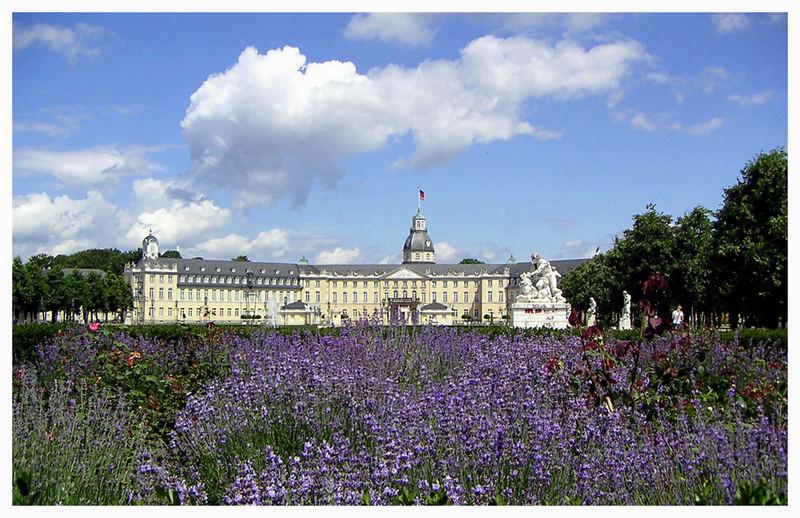Lavendelblüte vor dem Karlsruher Schloss