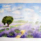 ~~Lavendelfeld~~