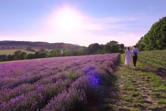 Lavendelfelder-Frommhausen-Lippe