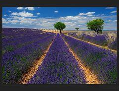 Lavendelidylle