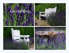 Lavendelzeit...
