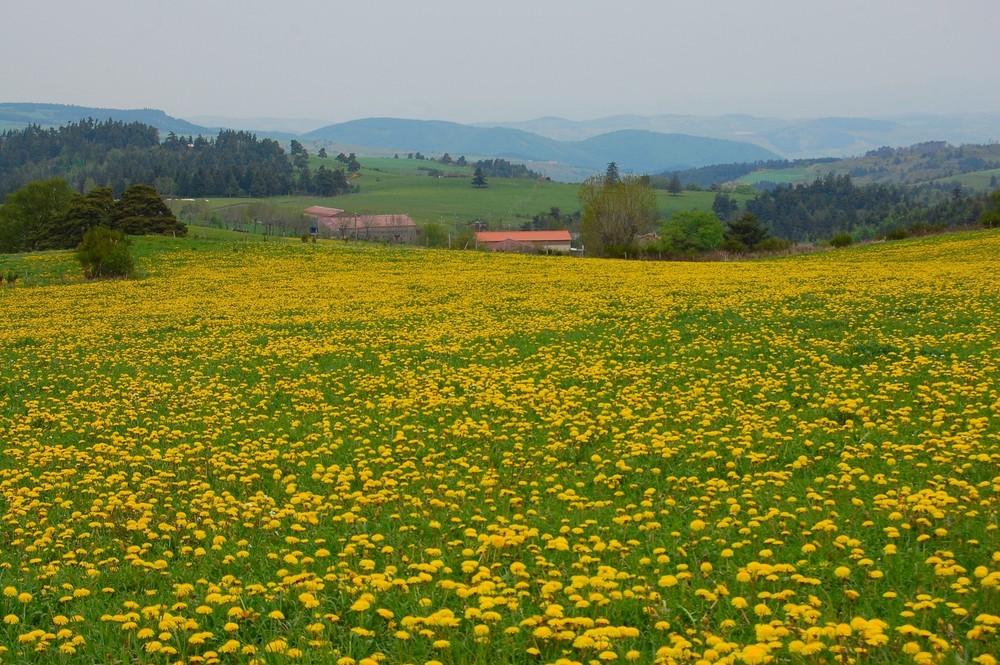 L'Aveyron déroule pour vous son tapis vert et jaune