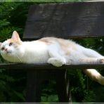 Laziness in the garden