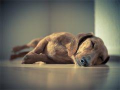 lazy...