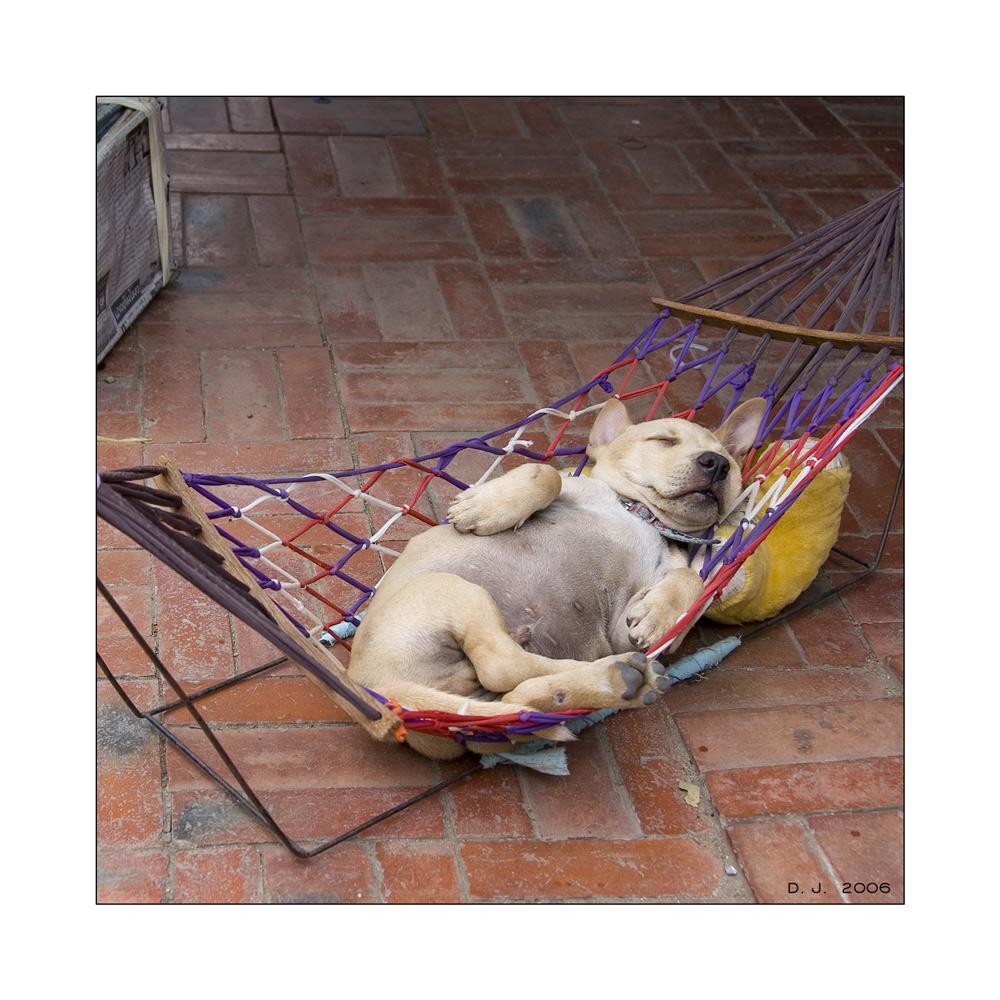 Lazy dog ...