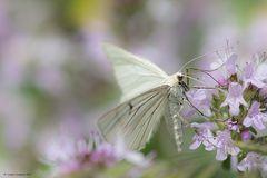 Le ali della primavera