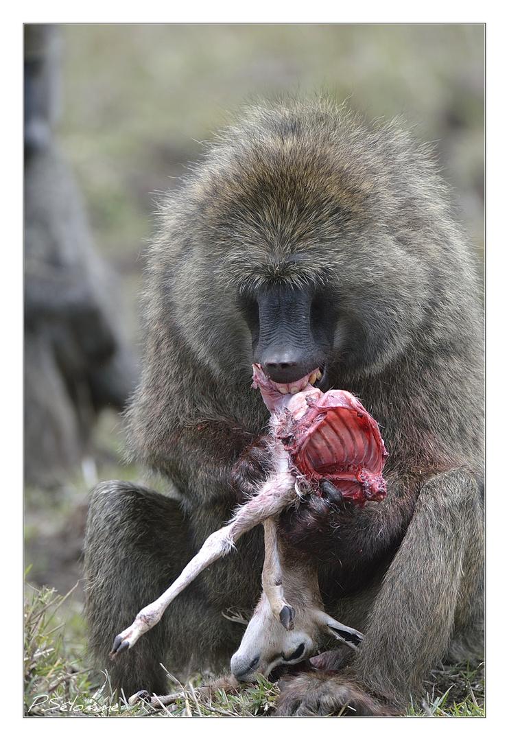 Le babouin et la gazelle photo et image animaux animaux sauvages nature images fotocommunity - Babouin et belette ...