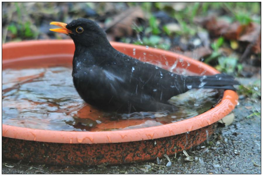 Le bain de Monsieur