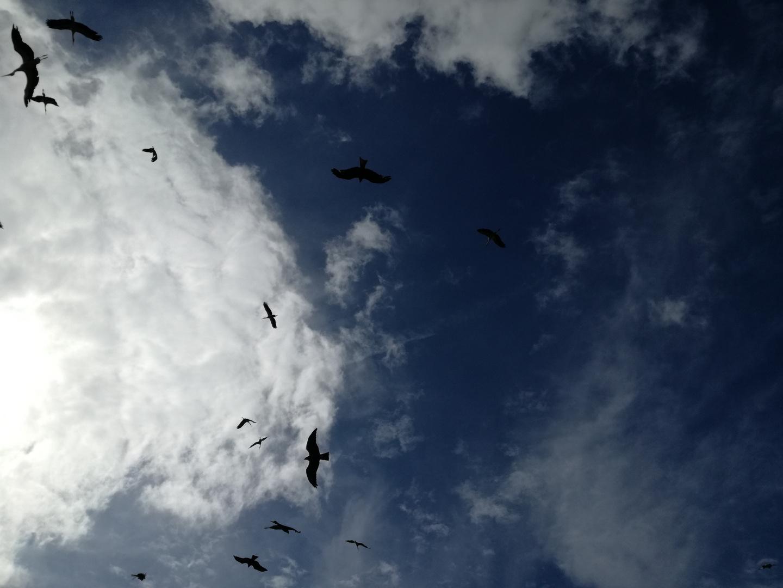 Le Bal des oiseaux fantômes ... Puy du Fou