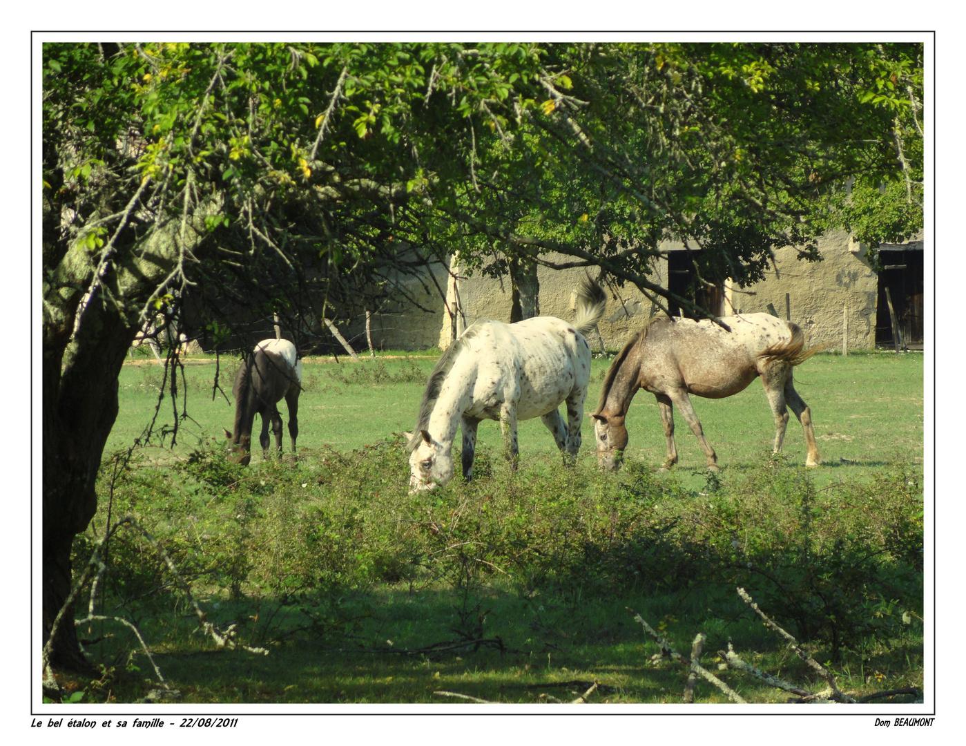 Le bel étalon et sa famille - 22/08/2011