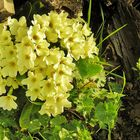 Le bouquet jaune !
