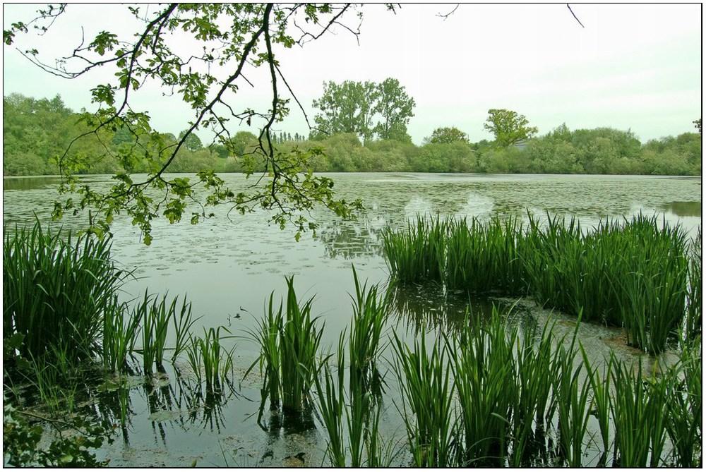 Le calme de l'étang