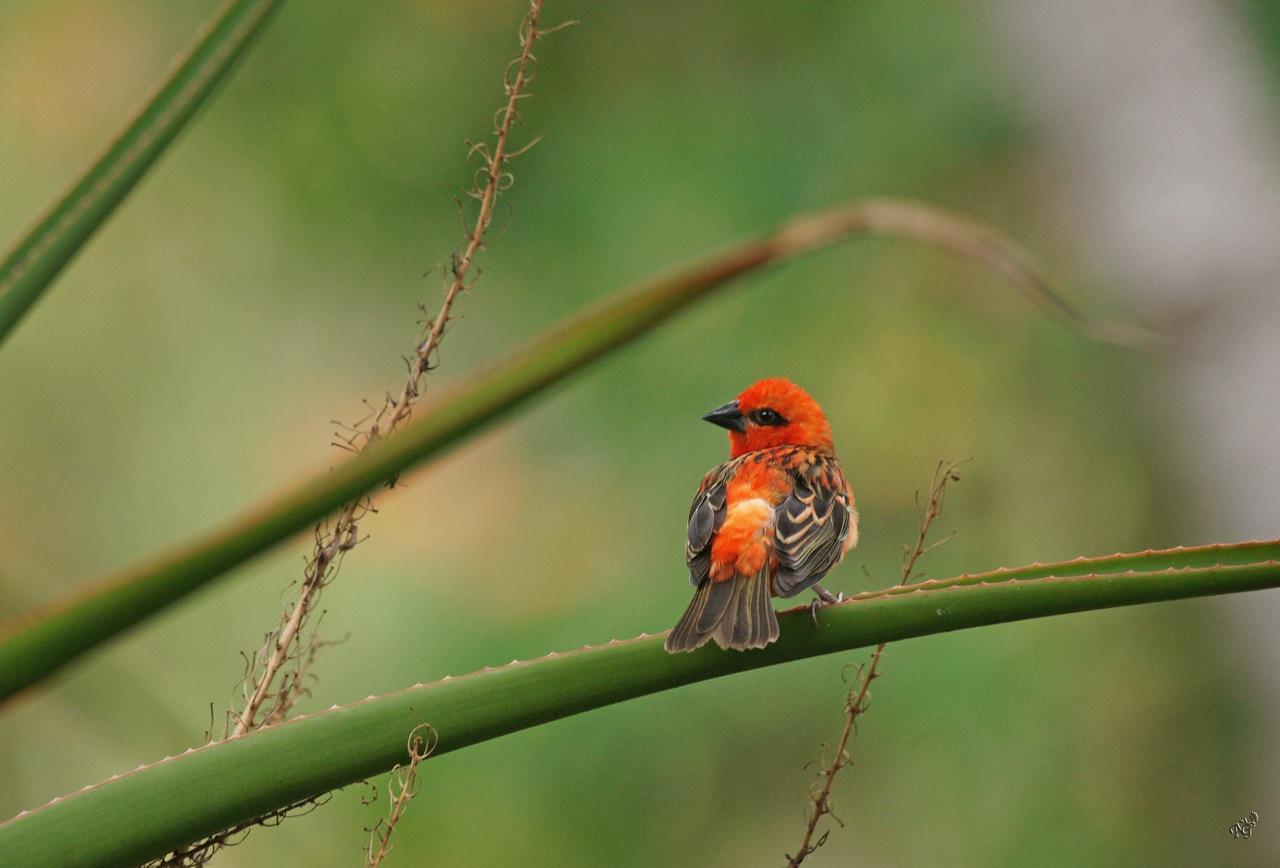 Le Cardinal ......