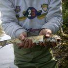 Le catture nel fiume Sieve