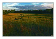 Le champ de blé sans corbeaux...