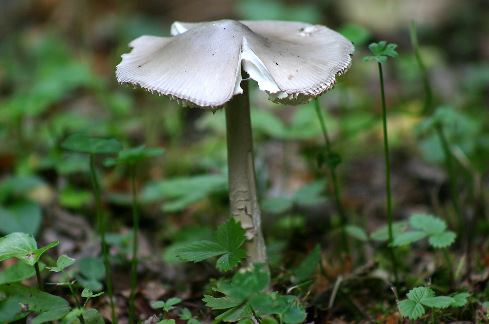 Le champignon....