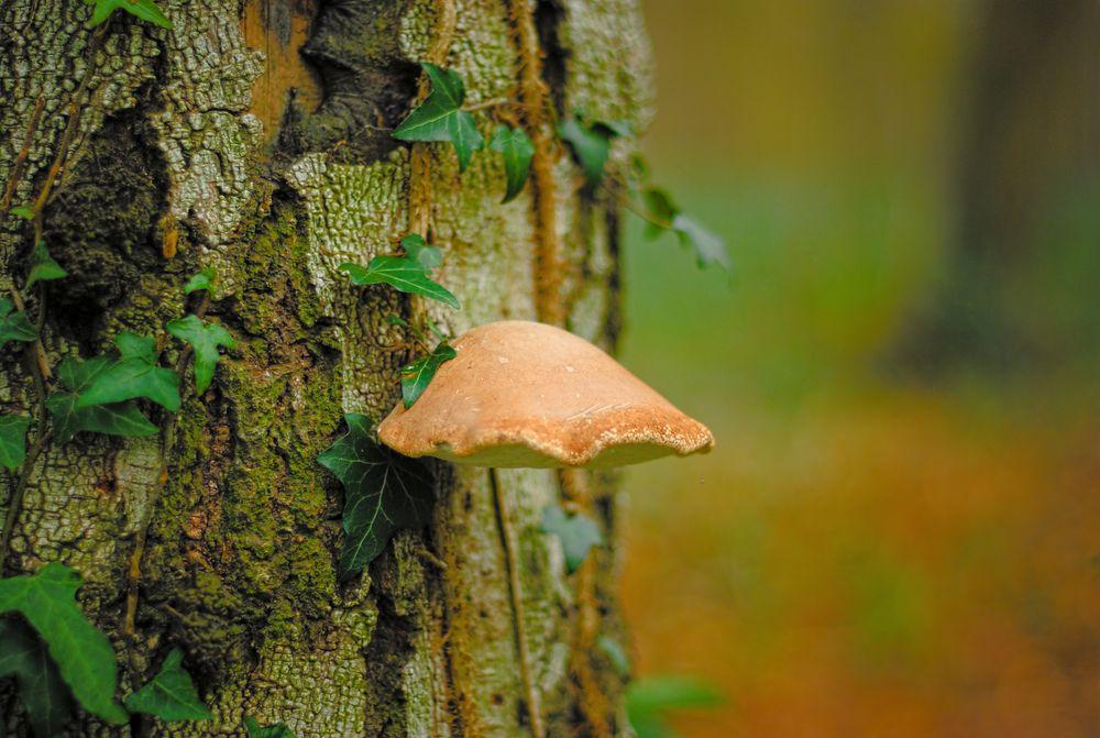 Le champignon sur l'arbre