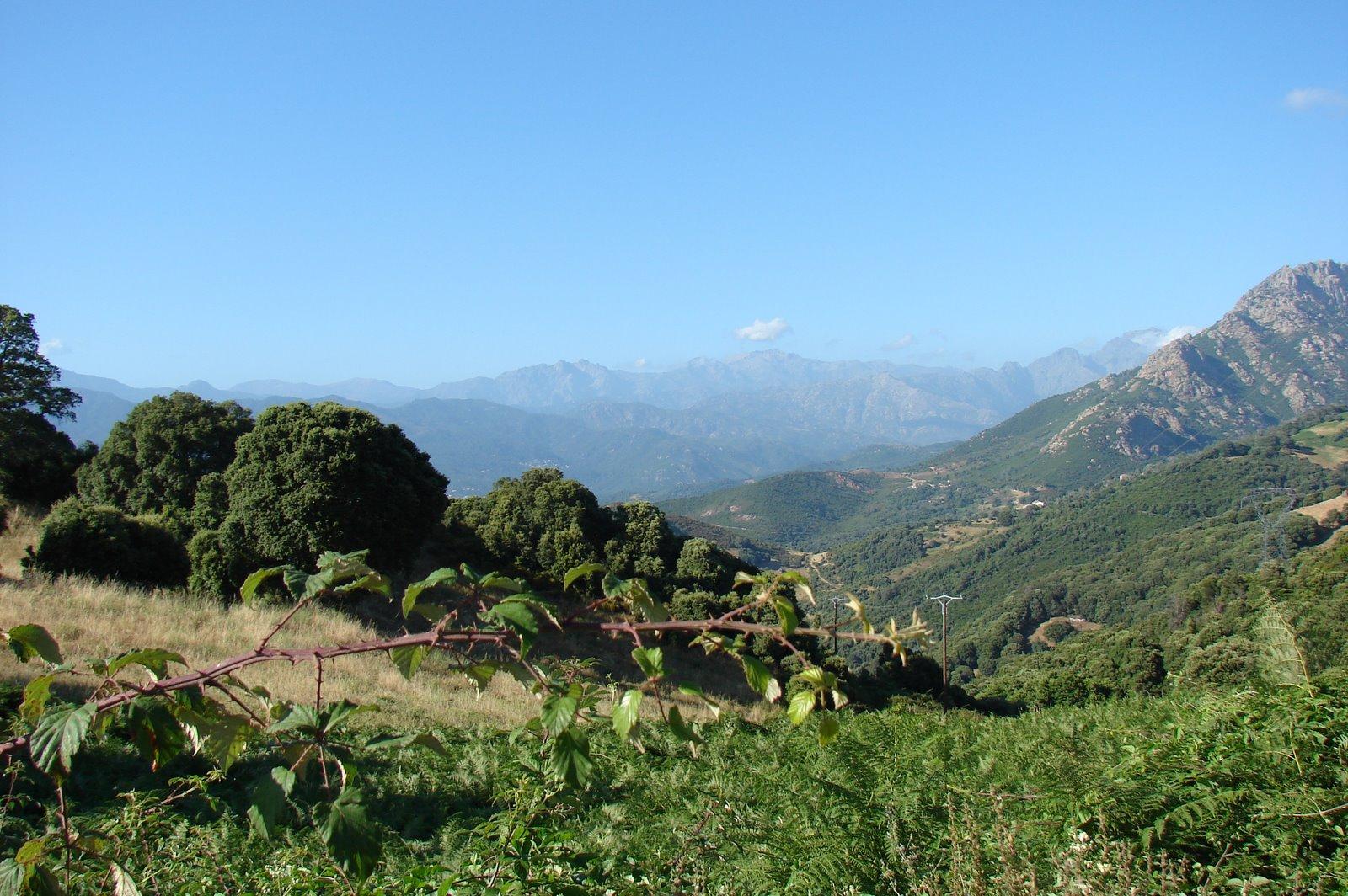 le charme du maquis corse photo et image | paysages, paysages de campagne,  village Images fotocommunity