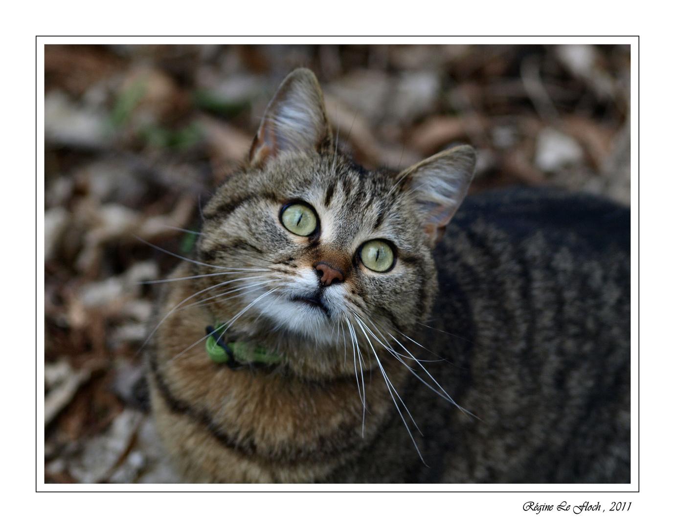 Le chat aux yeux verts....