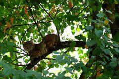 le chat dans l'arbre
