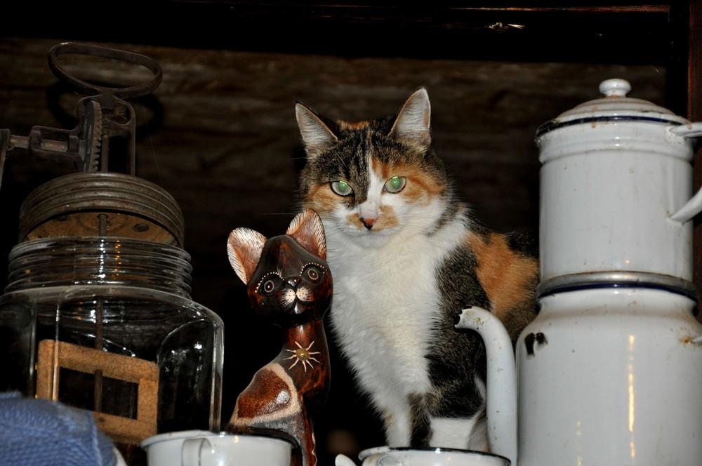 le chat dans un restaurant au Plan sur Bex en Suisse