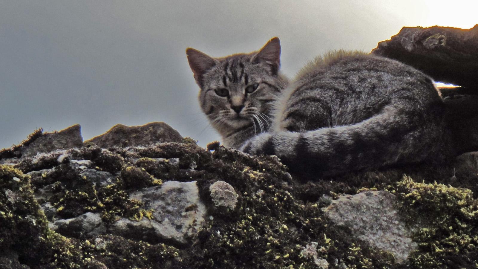 Le chat de Châteauneuf