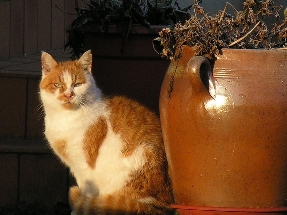 Le chat de la voisine ...