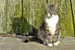 Le chat de Larros (2)