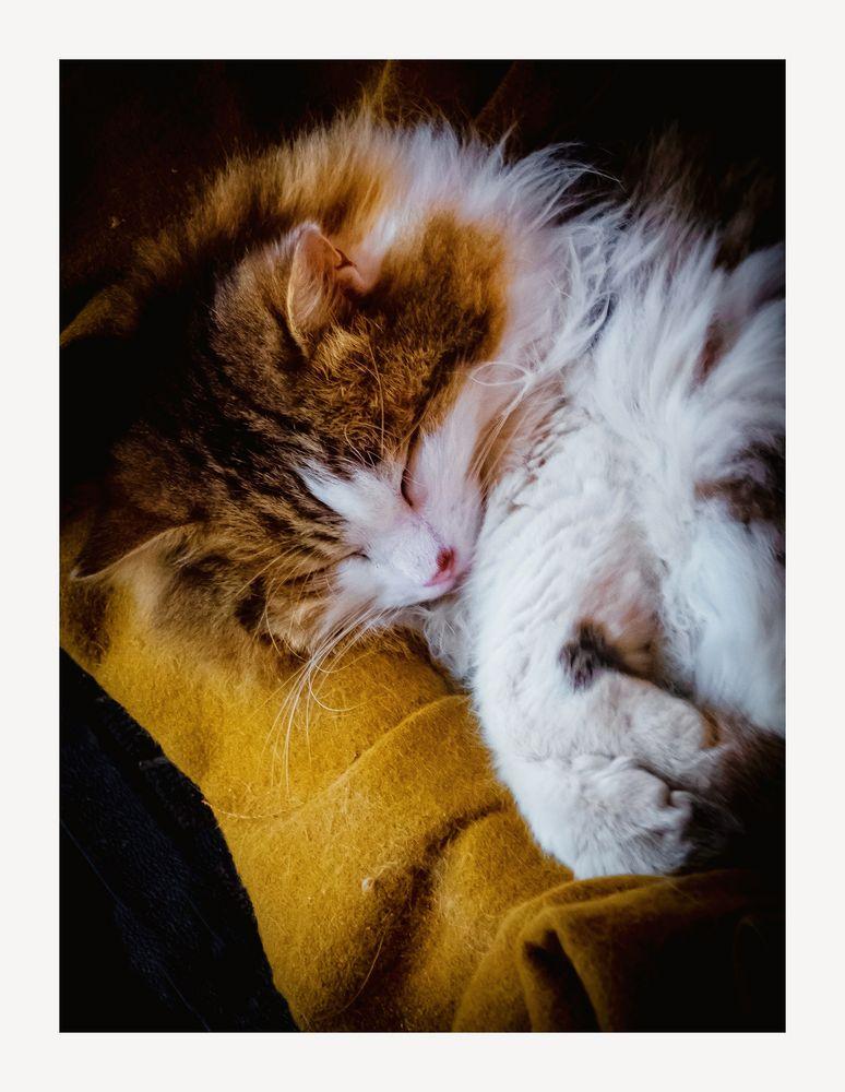Le chat dort