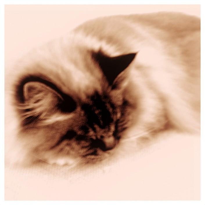 le chat du café des artistes