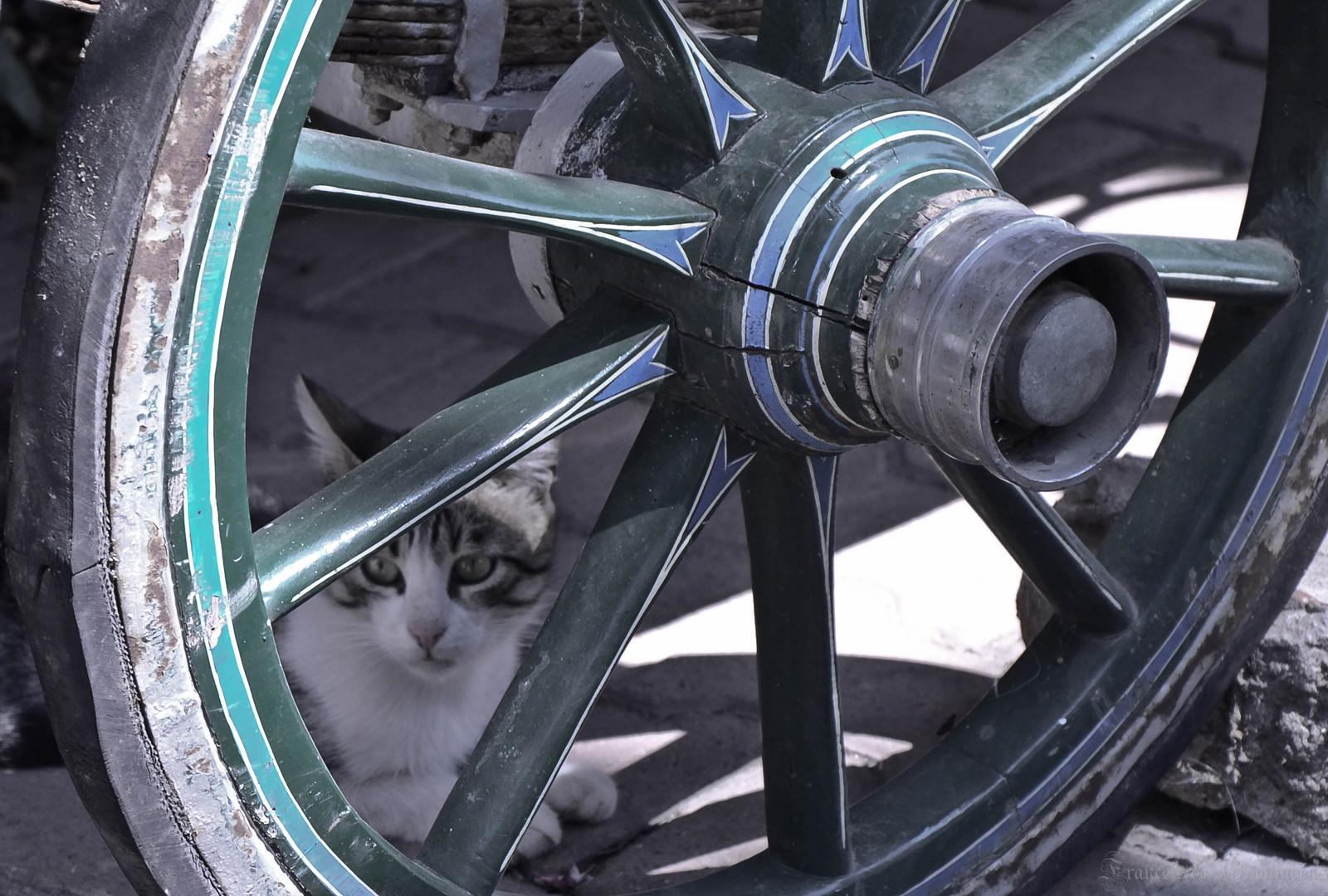 Le chat et la roue