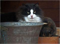 *le chat et le chaudron*