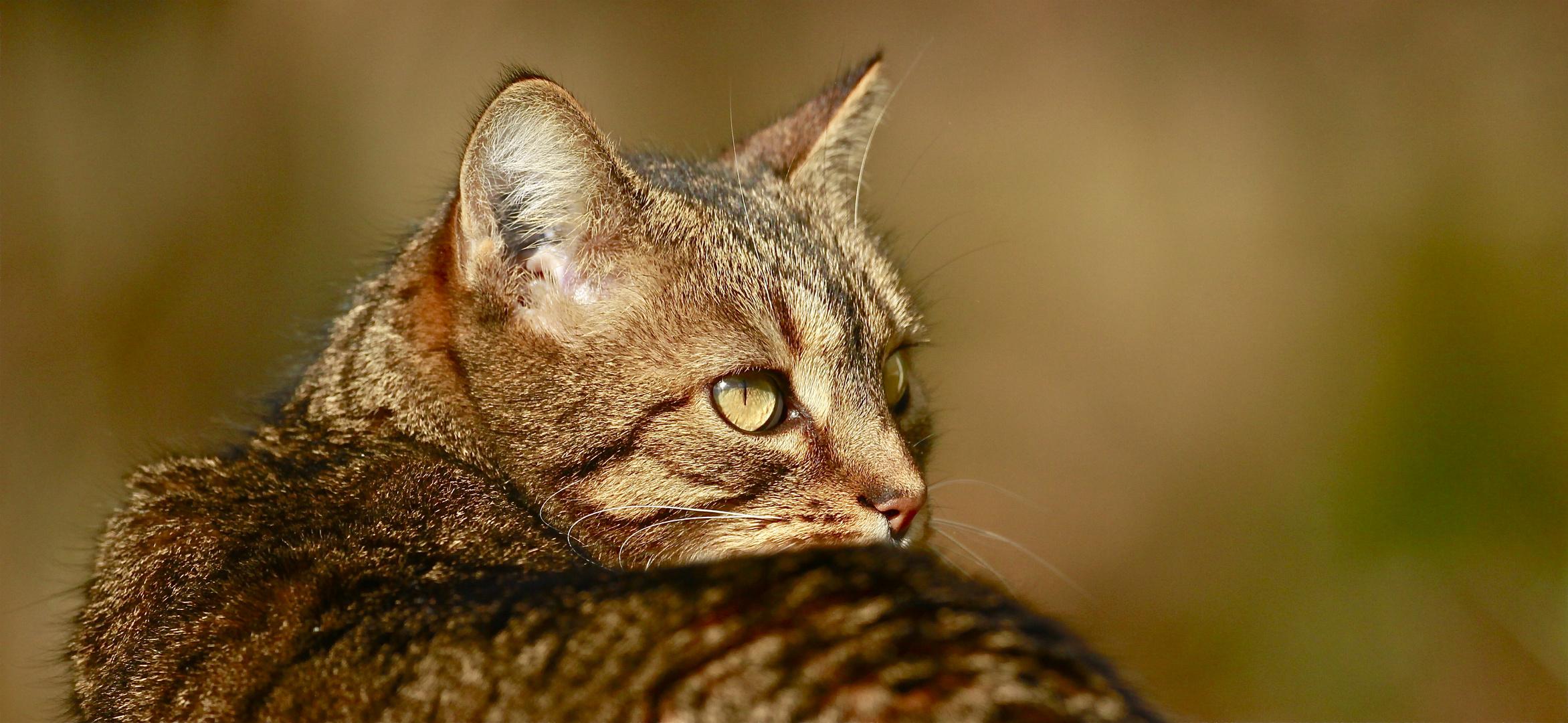 Le chat.....