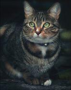 Le chat lumière