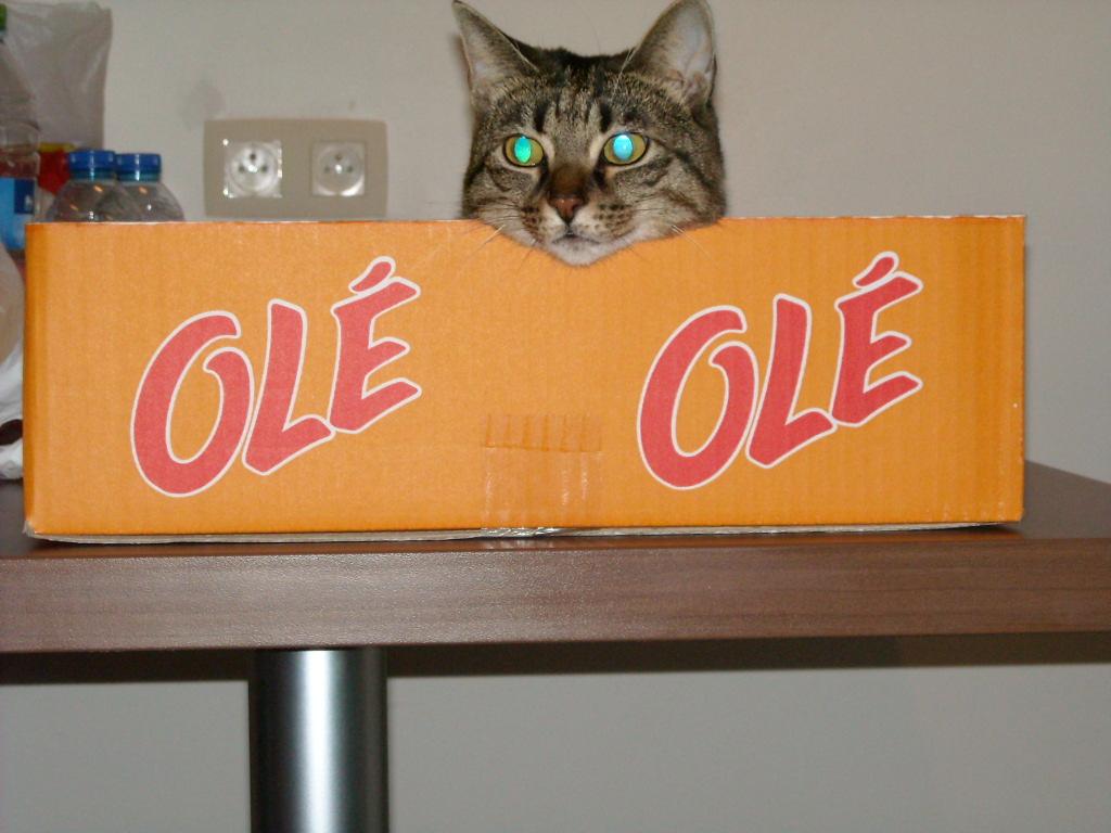 le chat mis en boîte