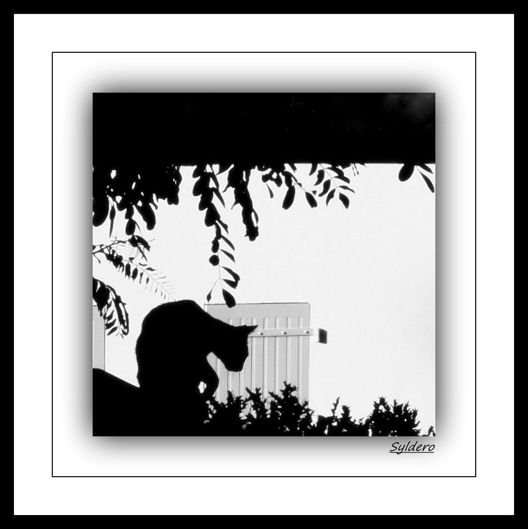 Le chat noir -2-