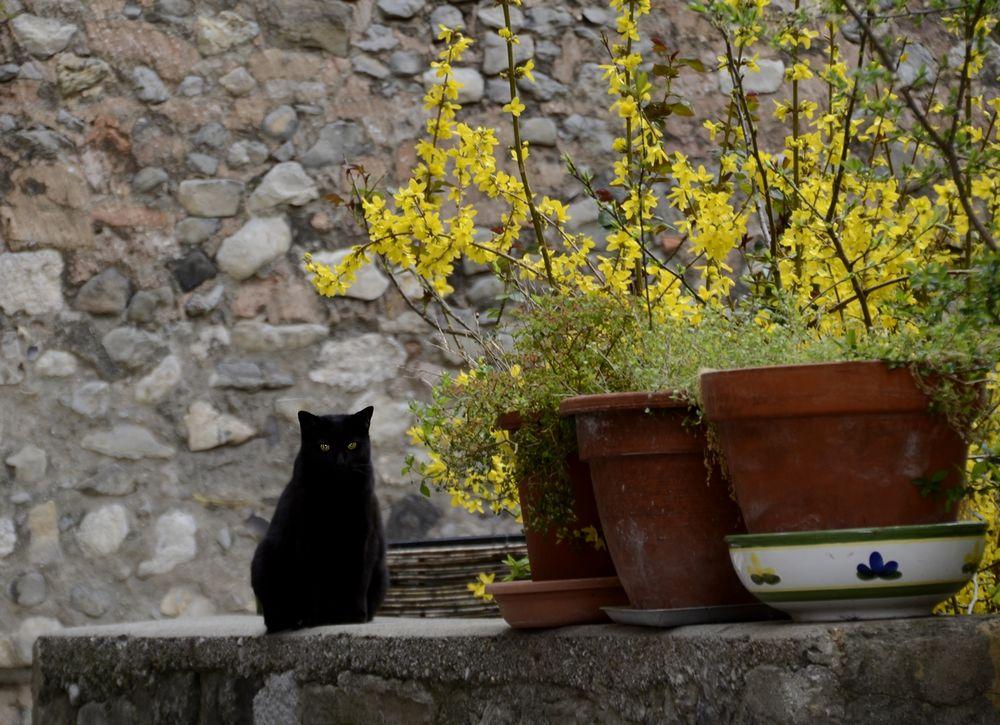 * le chat noir *