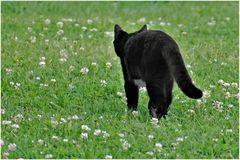 le chat qui s en va tout seul ...